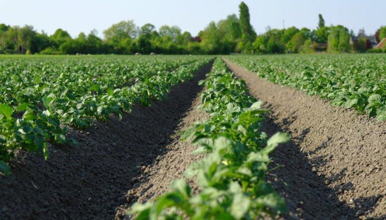 Biežāk sastopamās kartupeļu slimības un padomi to ierobežošanai