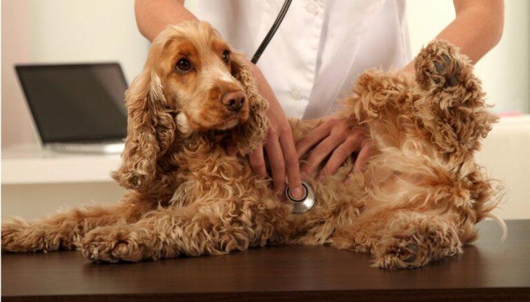 Вся правда о вакцинации собак и кошек