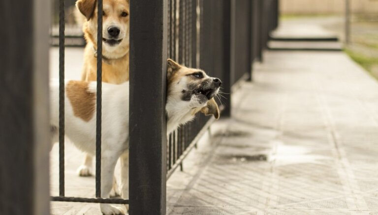 Rīga patversmju iepirkumu gatavošanas procesā sola definēt augstus dzīvnieku uzturēšanas standartus