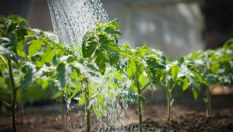 Ieteicamās dārzeņu sējas dienas 2019. gada pavasarī