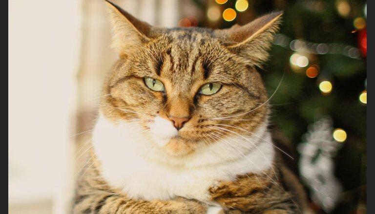 Опасный Новый год. Чего должны бояться владельцы котов?