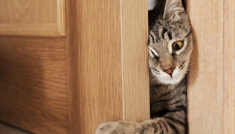 Rosina ļaut piespiedu iekļūšanu dzīvoklī, ja īpašnieks nepilda likumu