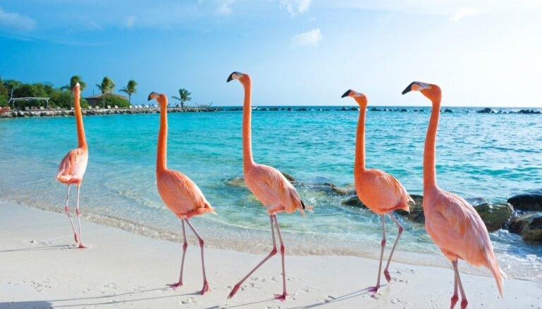 Flamingo pludmale, kur var sastapt graciozos putnus un atpūsties bez bērniem