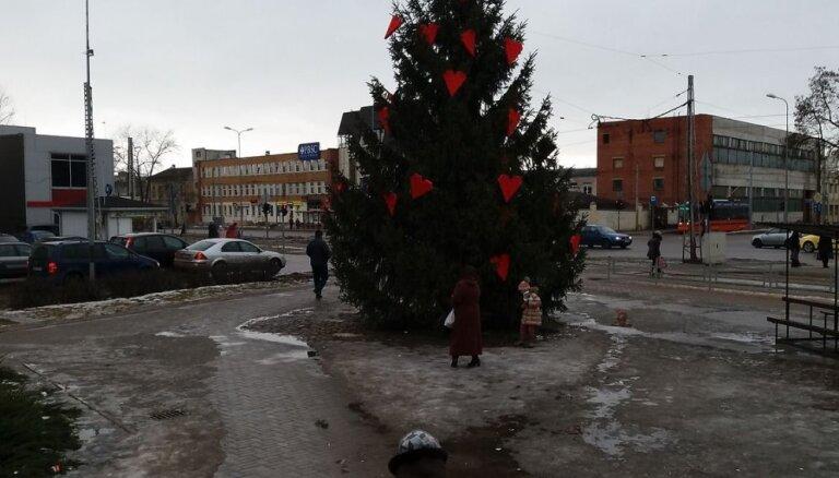 Daugavpilī nenovāktā Ziemassvētku egle pārtop par Valentīndienas egli