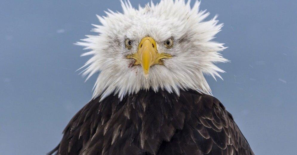 Открытка восьмым, год парящего орла смешные картинки