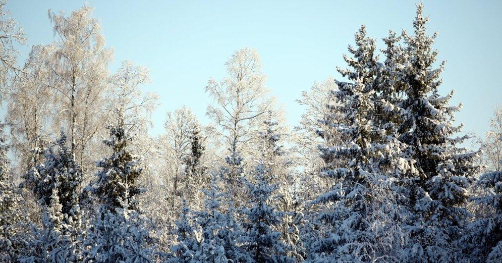 В воскресенье в Латвии похолодает, в понедельник ожидаются заморозки