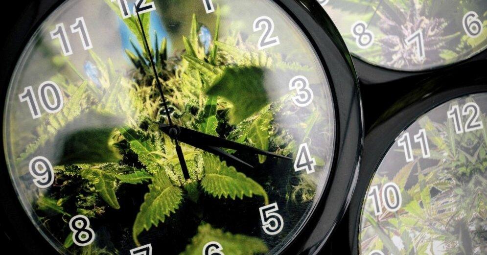 Отныне в Канаде разрешена свободная продажа марихуаны для развлечений и удовольствий