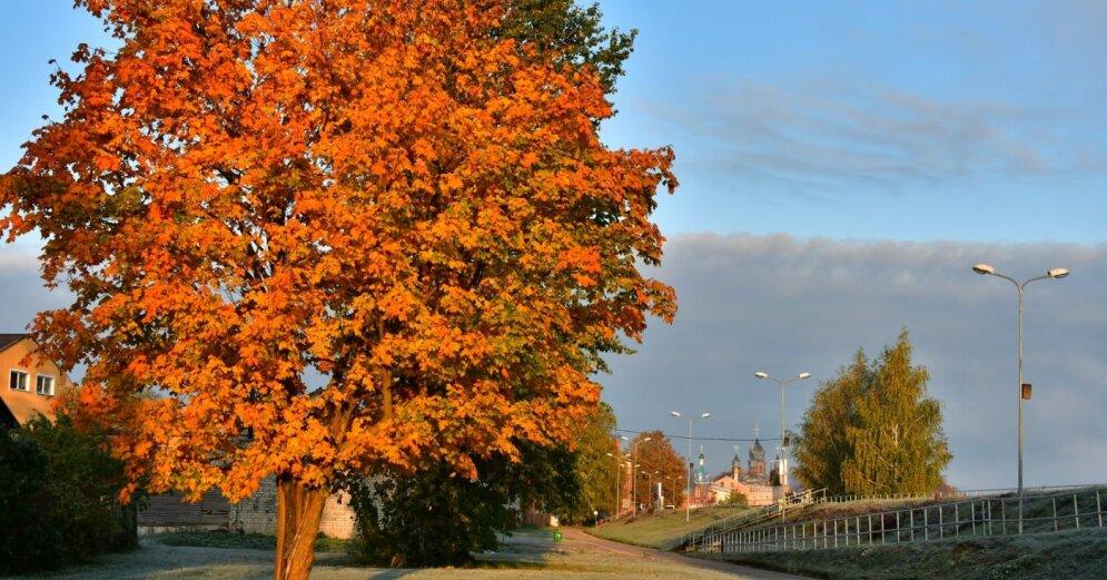 Астрономическая осень начнется с заморозков. Какими же будут осенние и зимние месяцы?