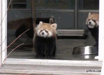 Šokēta panda
