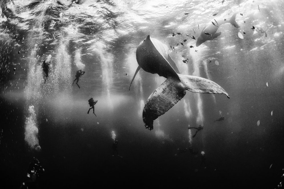 Топ-10 фото 2015 года читателей журнала National Geographic