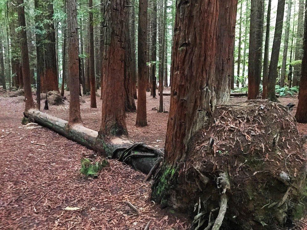 Приказано — выжить. 22 фото крутых деревьев, которые просто так не сдадутся