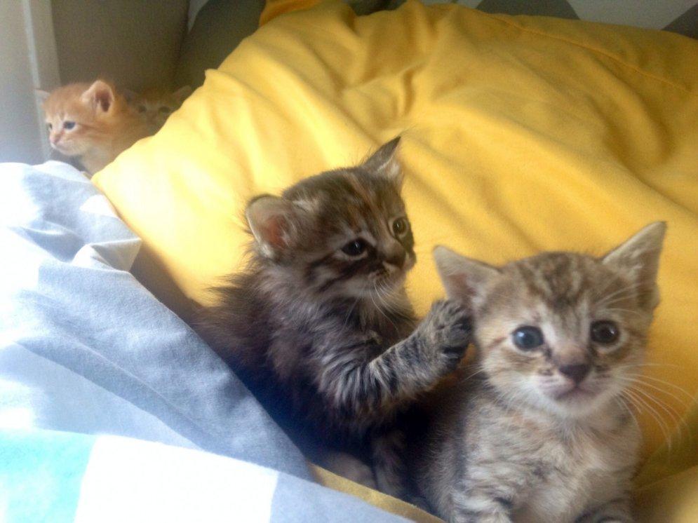 Pasaulē skumjākais kaķis - Psc