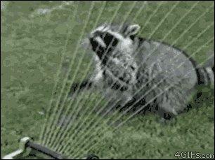 Dīvains dzīvnieciņš spēlē arfu