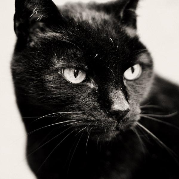 Bombejas kaķis