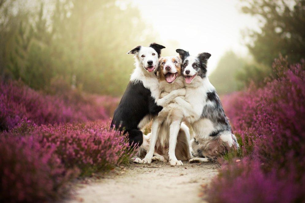 Согревающие душу портреты собак авторства 19-летней девушки-фотографа