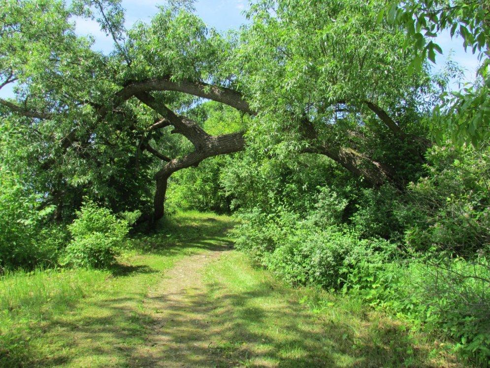 Dendroloģiskie jeb mākslīgi veidotie parki Latvijā
