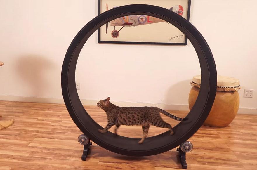 Беговое колесо для кошек сделать своими руками 40