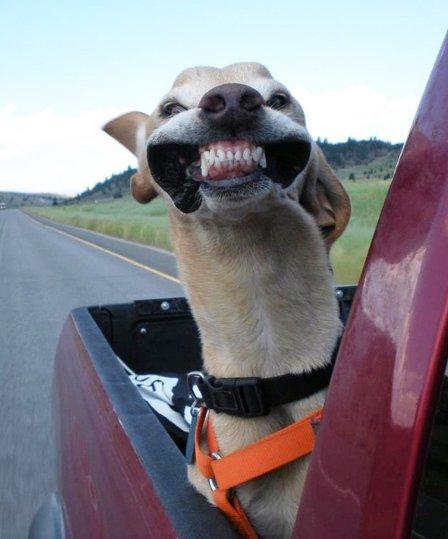 Suns, kurš izbauda ātrumu