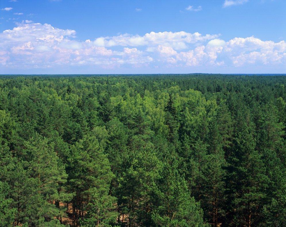 Septiņi fakti, ko, iespējams, nezināji par mežiem Latvijā