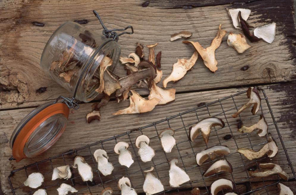 сушка белых грибов фото этот