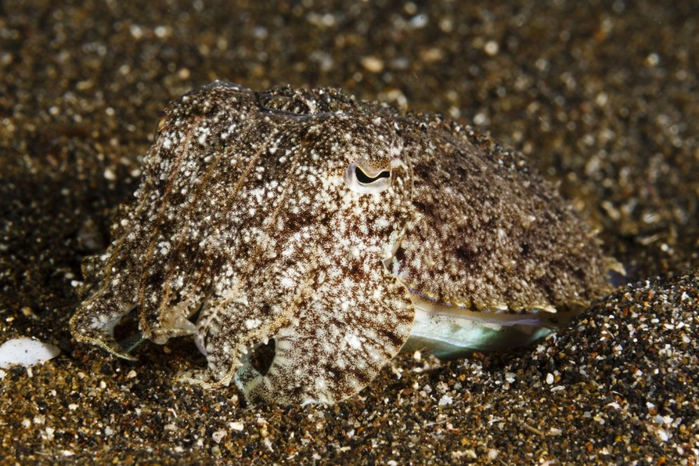Vai varat atrast krabi un astoņkāji? Kā maskējas jūras dzīvnieki
