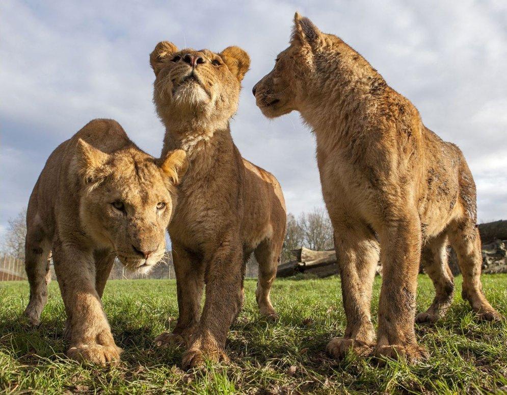Fotogrāfs uzņem bildes ar dzīvnieku purniem, kuras nevajadzēja publicēt