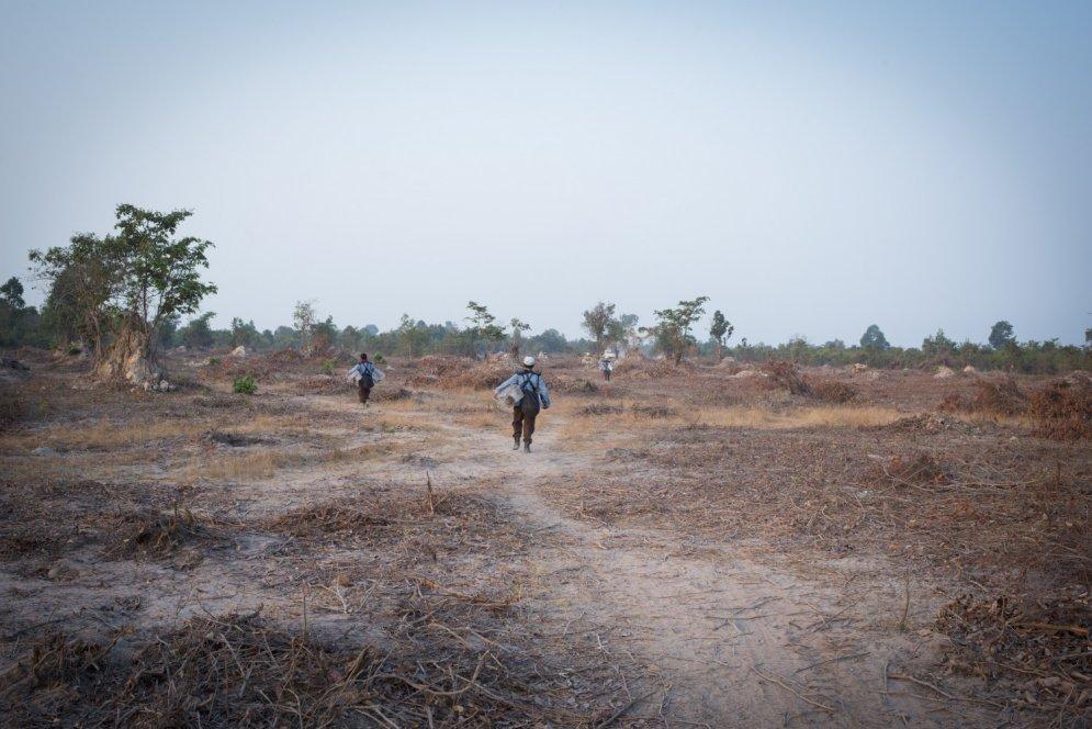 Milzu žurkas no Āfrikas Kambodžā meklē kājnieku mīnas