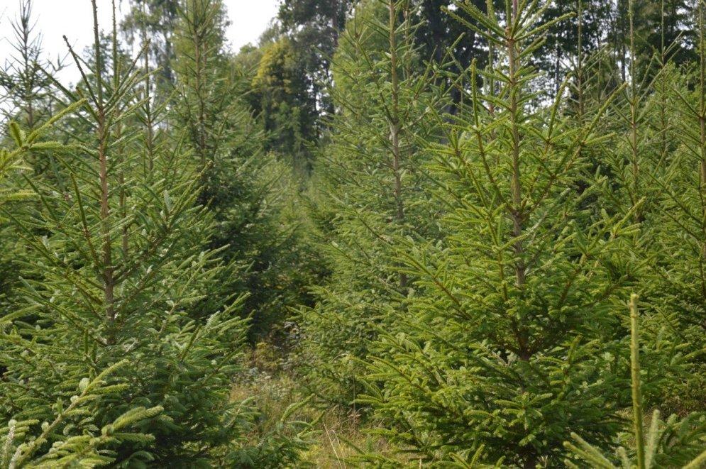 Konkursa 'Sakoptākais mežs 2018' dalībnieki