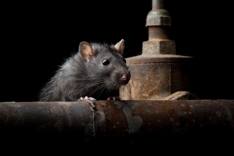 Uzbrūk ne tikai mušas. Dzīvnieku kari pret cilvēkiem